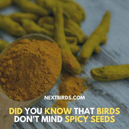 Add Some Spice to Your Bird Food