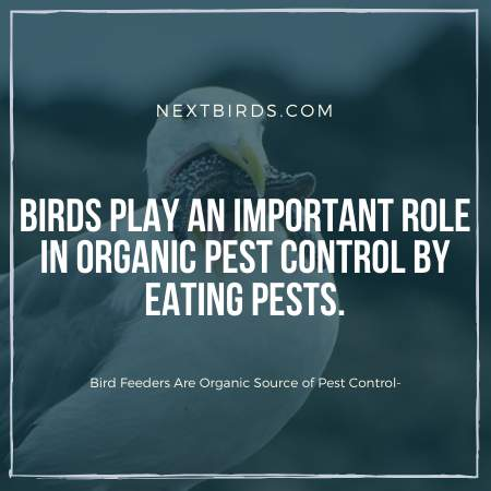Birds eating pest from your backyard