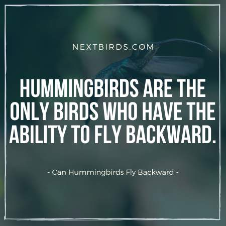 One of the most interesting Hummingbird Facts