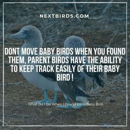 Dont Move Baby Birds From Their Place