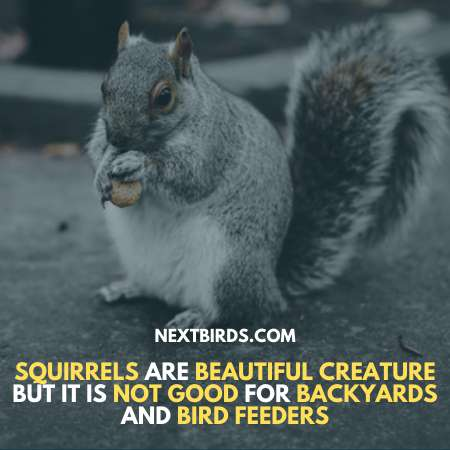 How to keep squirrels away from bird feeder