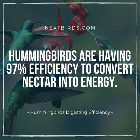 Hummingbird Facts - They have incredible digesting power