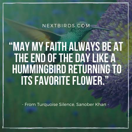 Hummingbird facts Quote by Snober Khan