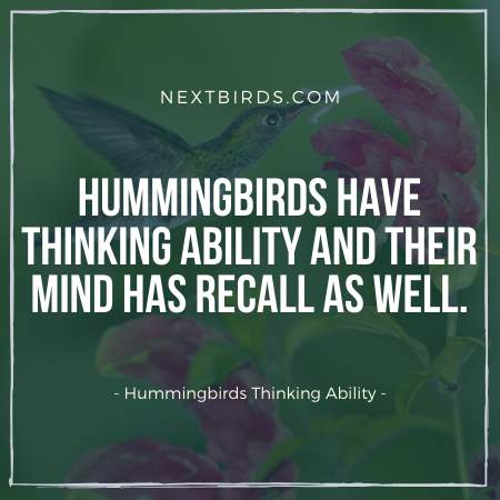 Humms have quite good thinking ability