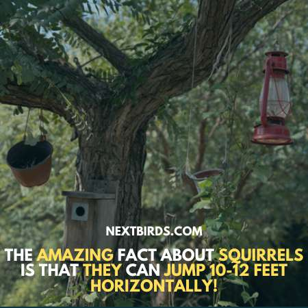 Place Your Bird Feeders Wisely to keep squirrel away