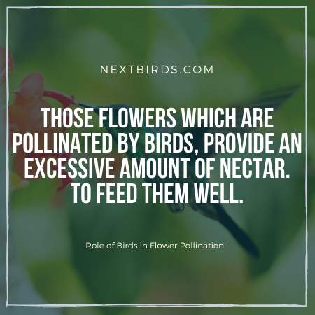 Birds visit backyard to feed themselves and pollinating flower.
