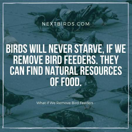 Birds are finding food without Bird Feeder.