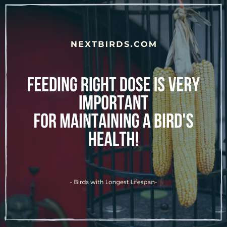 right dose factor About Birds Lifespan