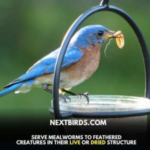Mealworm food for birds