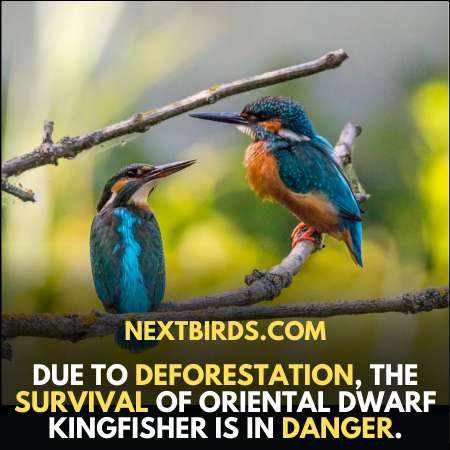 Almost all wild birds are in danger due to deforestation