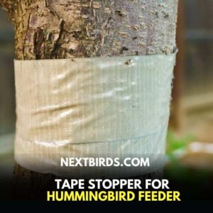 How to keep ants out of Hummingbird Feeder