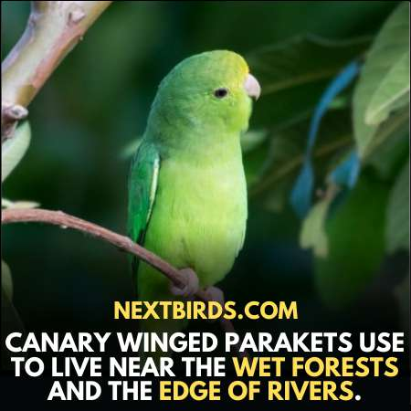 Where do Canaries used to live