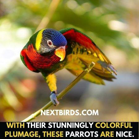 Have different colours feathers.