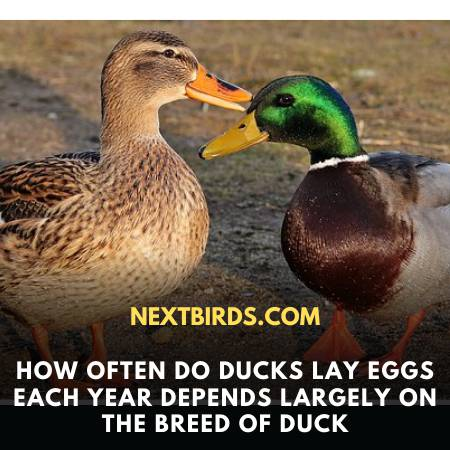 Different Species Varies The Egg Laying Phenomena