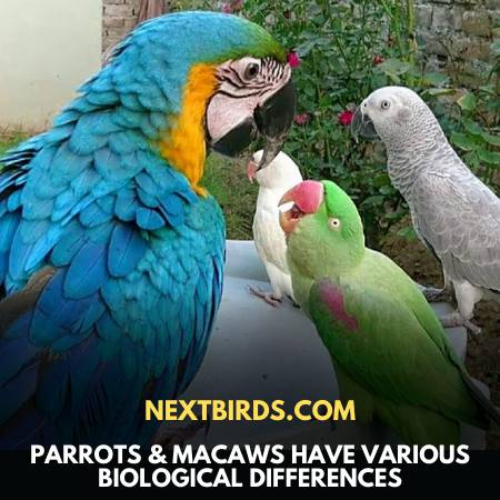 Macaw Vs. Parrot - Both Are Different