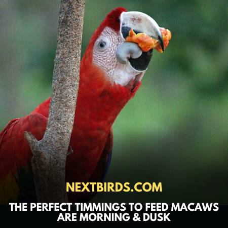 Macaw Vs. Parrot - Provide Food On Right Time