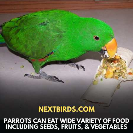 Wide variety Of Food For Parrots