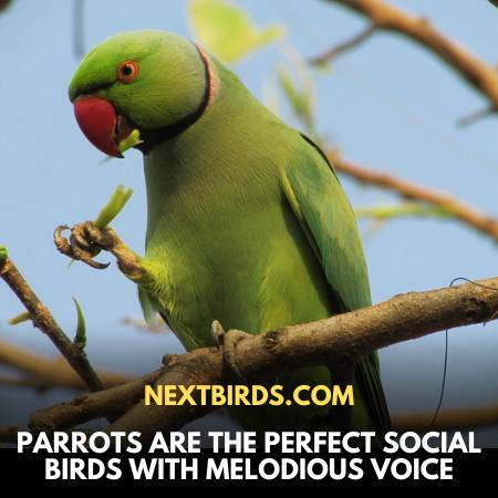 Macaw Vs. Parrot - Parrots Sing Melodious Songs