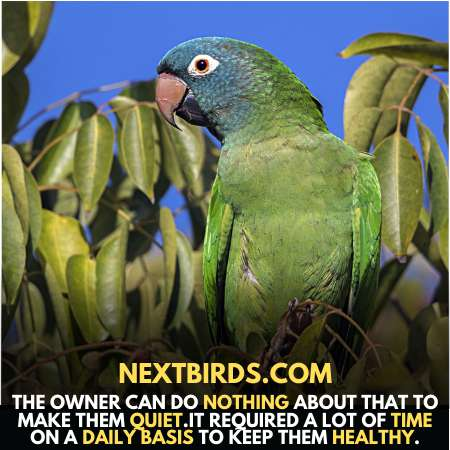 Owner can do nothing to make them quiet