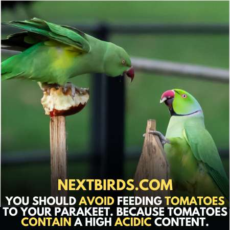 Tomatoes contain acidic content which can harm parrots