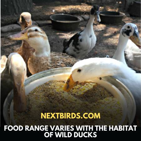 What To Feed Wild Ducks - Diverse Food Choice