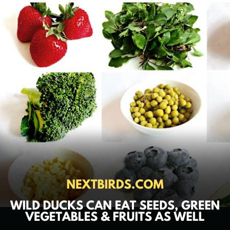 A Wide Range Of Good Food Source For Ducks