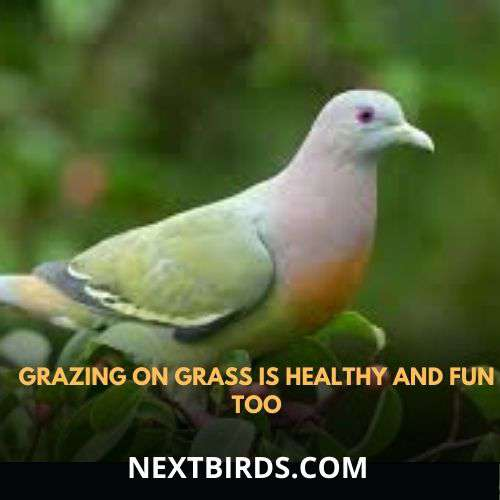 grazing on grass is healthy