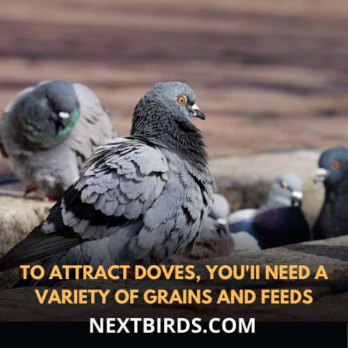 variety of food attracts doves